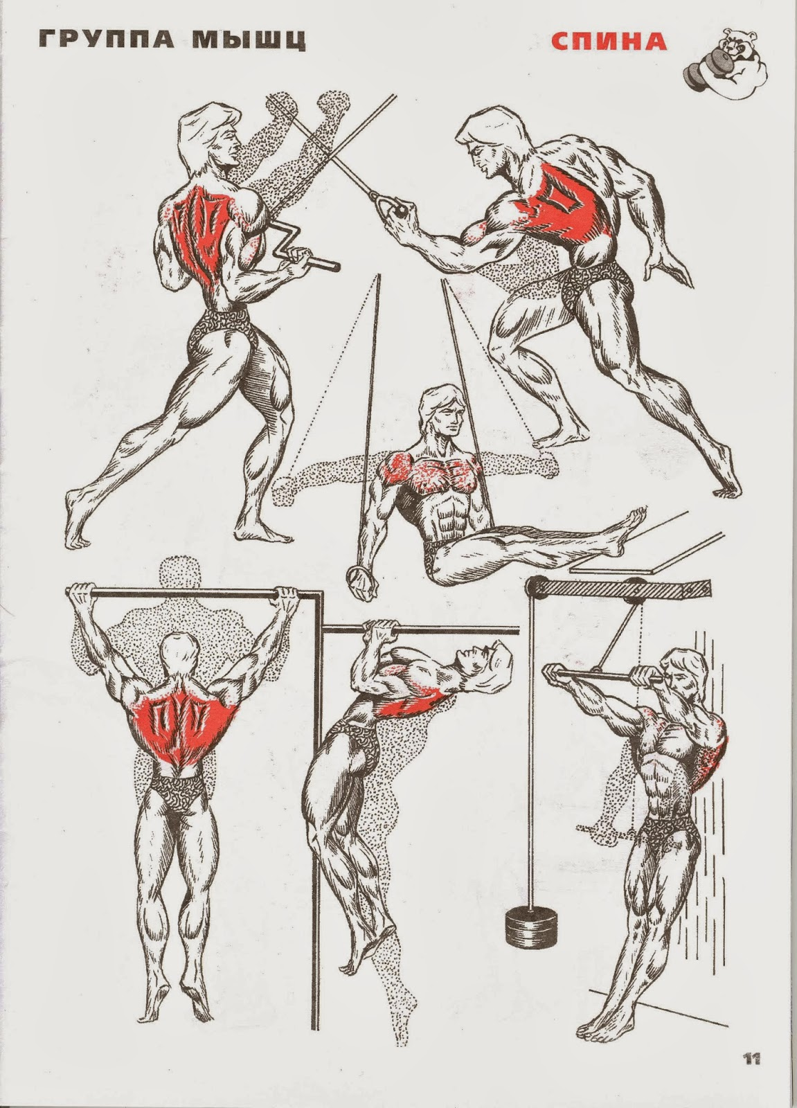 Прокачать мышцы спины в домашних условиях 35