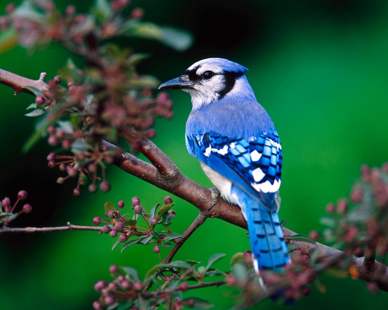 http://2.bp.blogspot.com/-xm_BviRz9Js/T7ioBlkGUqI/AAAAAAAAIWk/FAtINl0pJfs/s1600/Beautiful+Birds+Wallpapers+12.jpg