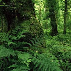 Foto-Foto Pemandangan Hutan yang Alami (Ukuran Besar)