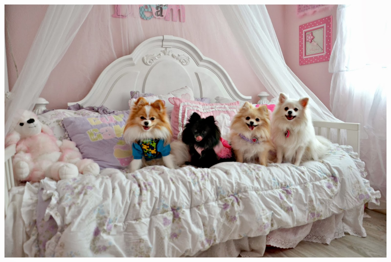 Not So Shabby - Shabby Chic: New floors in the doggie playroom
