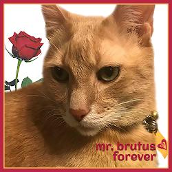 RIP MR. BRUTUS