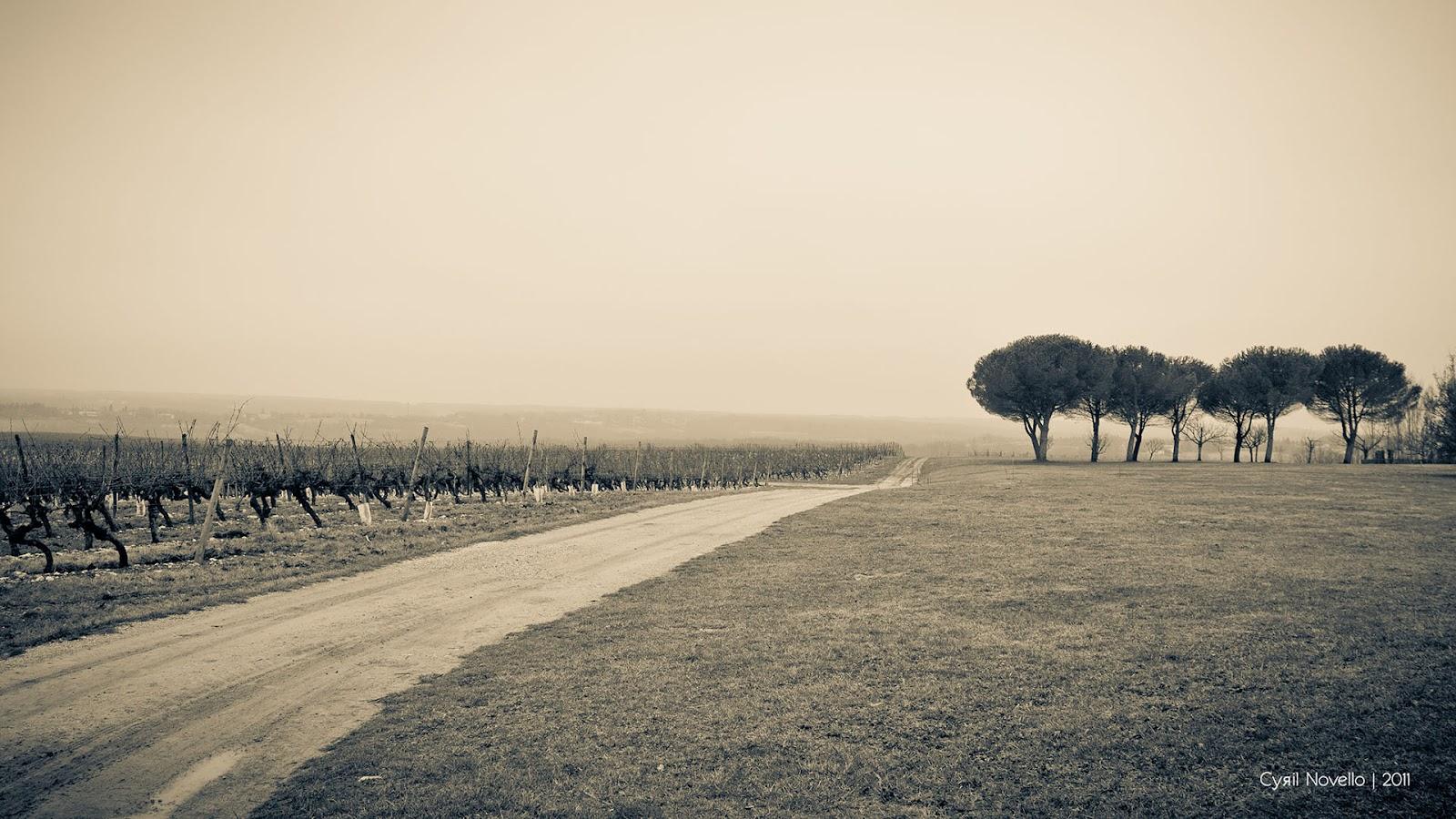 http://2.bp.blogspot.com/-xn0mFw9tAH4/UGzaVdXku-I/AAAAAAAAGJA/4Wy6uxSl3Ag/s1600/pines_and_vineyards_by_cyrilnovello.jpg