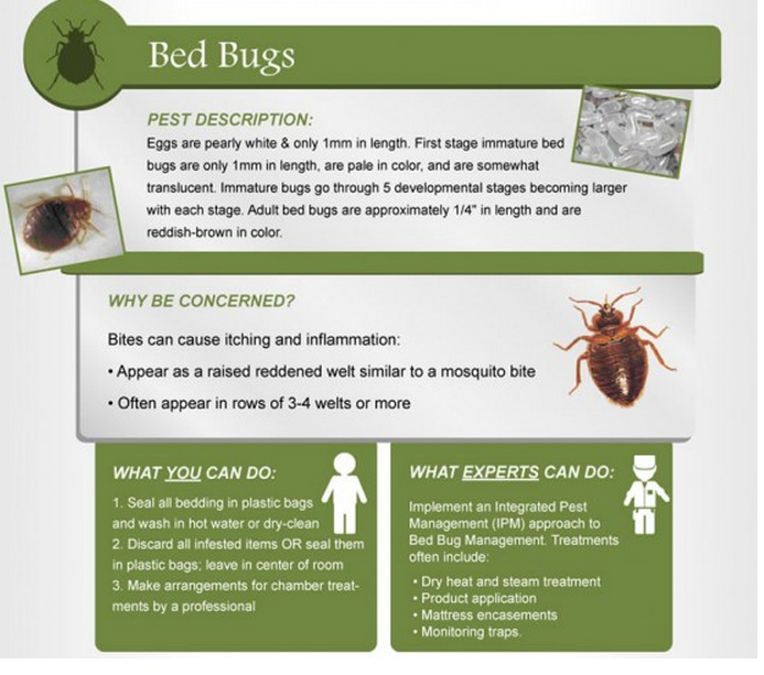 a good infographic on bed bugs profile and their behaviour