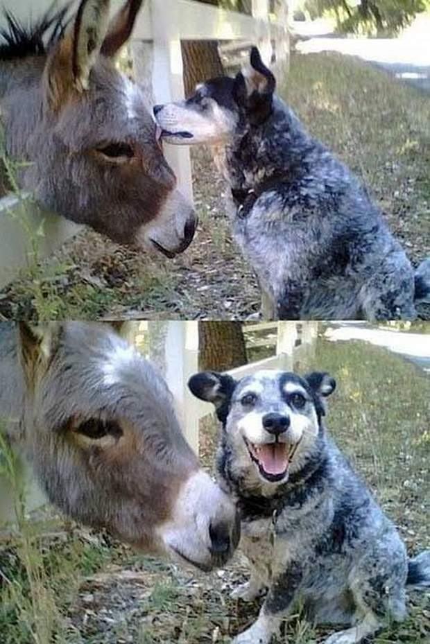 Funny animals of the week - 29 January 2016, best funny animal photos, animal photo album, funny animal pic