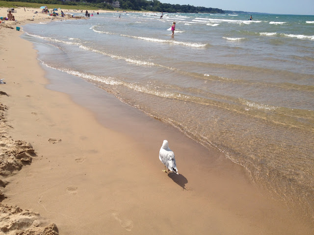 beach with a seagull