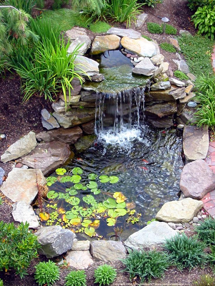 Plantas m gicas im genes de jardines acu ticos for Jardin acuatico