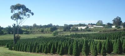 Christmas Tree Farm list