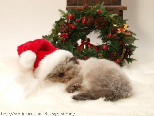 Christmas cat sleeping.