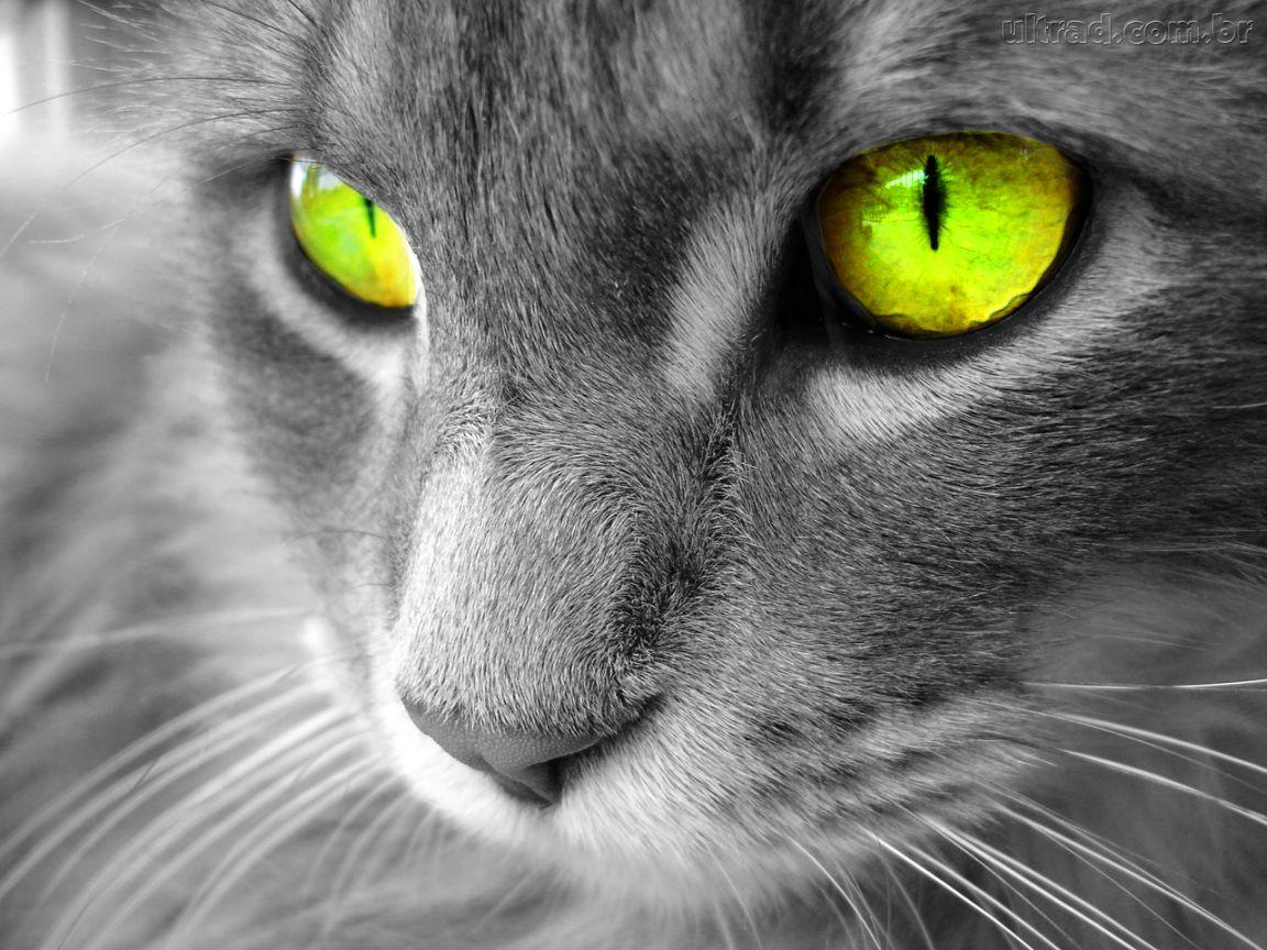 http://2.bp.blogspot.com/-xokVoc5jaUQ/TZvIKhBUpSI/AAAAAAAACUg/iW_f0Af38pY/s1600/93610_Papel-de-Parede-Gato-de-olhos-verdes_1152x864.jpg