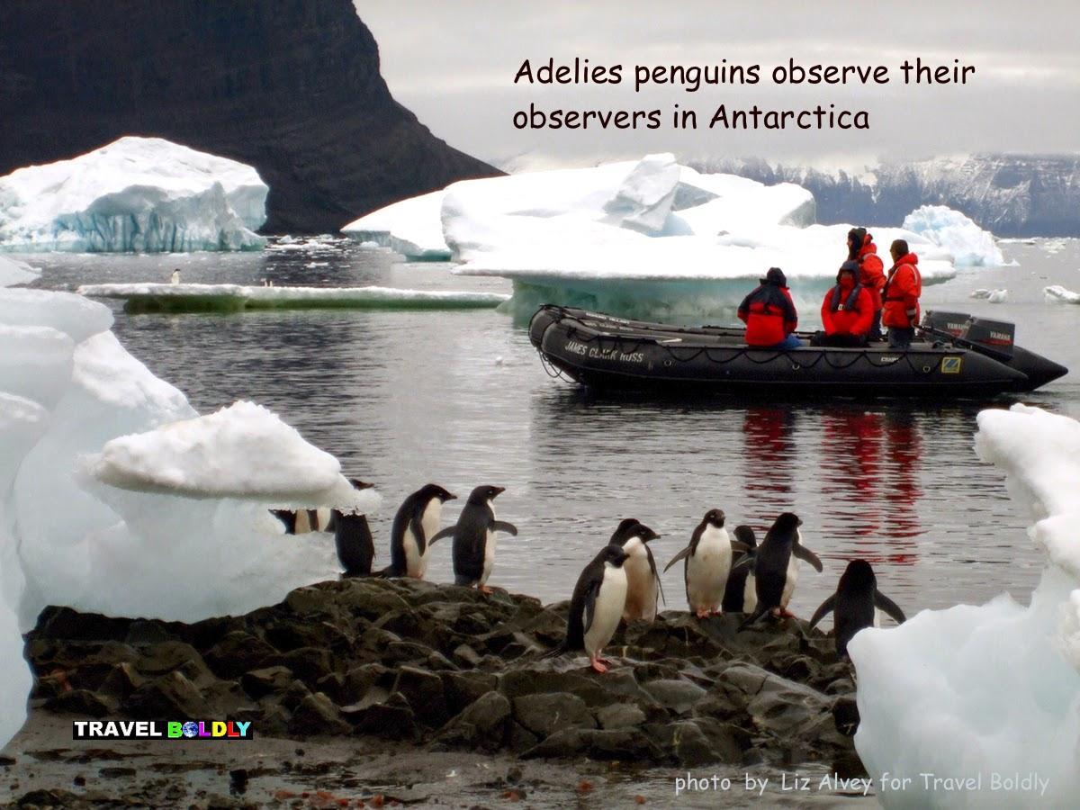 Penguin observe their observers. Antarctica  Photo: Liz Alvey for Travel Boldly