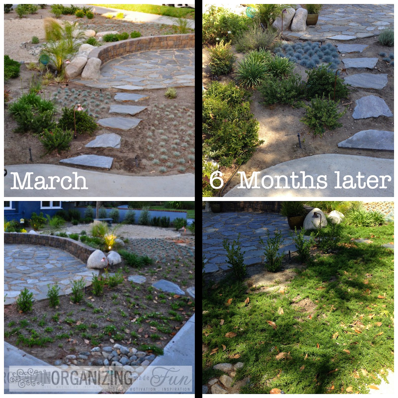 After: Drought Tolerant beautiful landscape ::OrganizingMadeFun.com