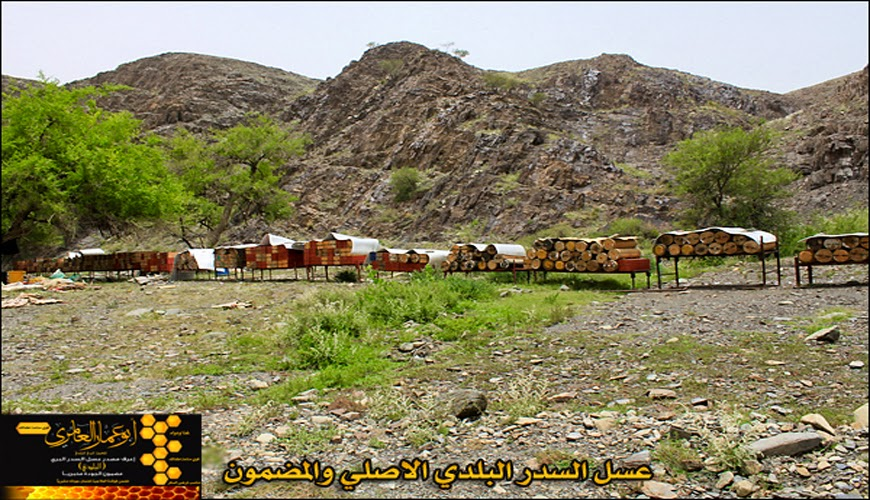 عسل السدر البلدي الاصلي مضمون ذمه ومختبر