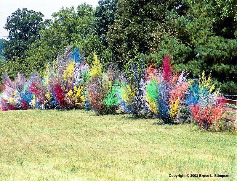 Jardinitis rboles decorados for Decoracion de arboles de jardin