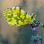 Insekten und so in Südfrankreich