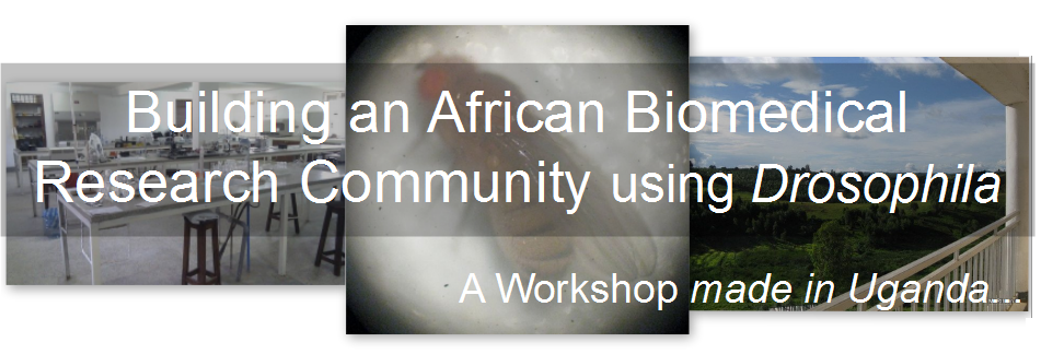 Building an African Biomedical Research Community using Drosophila