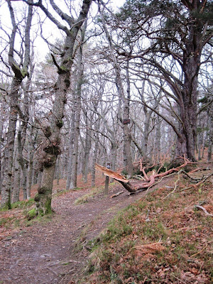 A junction in the path around Craigendarroch, Deeside