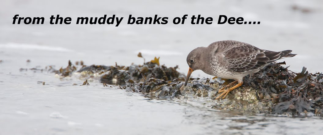 From the muddy banks of the Dee....