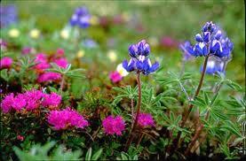 Samurai Flora Dan Fauna
