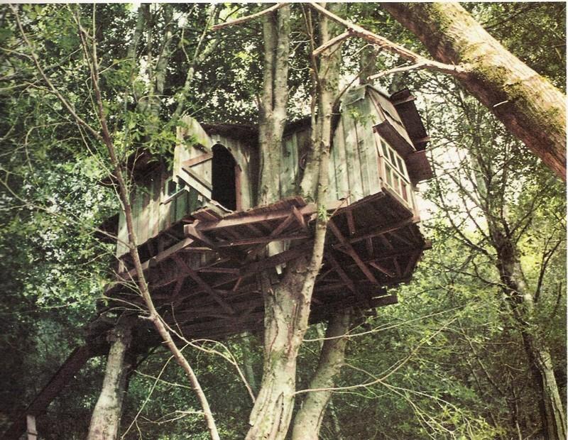 Ici et maintenant dans une cabane de la cabane dans l - Construire une maison dans un arbre ...