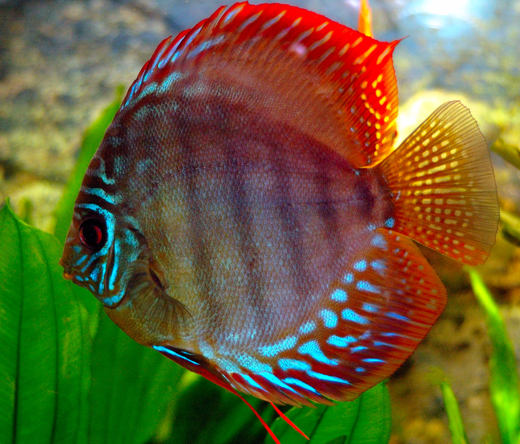 discus the life of animals