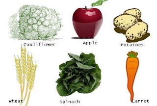 Food Science essaytigers