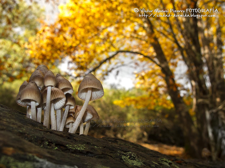 Oto o en extremadura cuando el paisaje se transforma - Fotos bonitas de otono ...