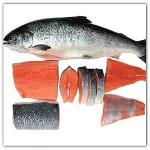 Ikan Salmon Baik dikonsumsi Ibu Hamil
