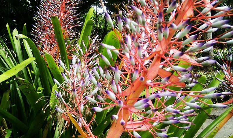 Cris y una monta a de gente una mano a las palmas del - Jardin botanico las palmas ...