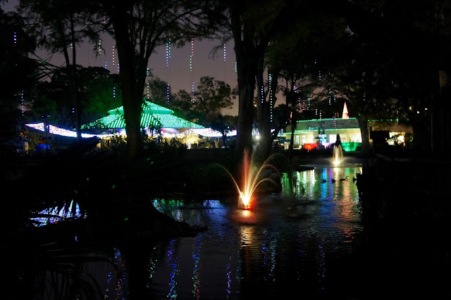 Photos from the San Antonio Zoo, Zoo Lights, Holiday Nights