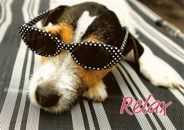 sleeping dog with sunglasses