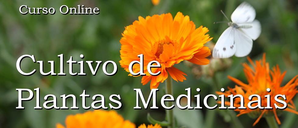 PLANTAS MEDICINAIS - CLIQUE ABAIXO !