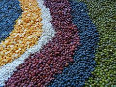 Lentil Bean Fusion