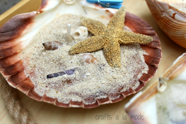 sea star and sea shells in a big scallop shell with wax to make a candle