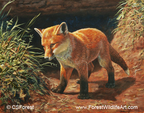 Forest Wildlife Art Coloring Book Page Red Fox Pup