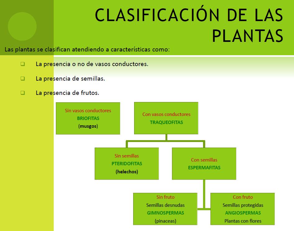 CRITERIOS DE CLASIFICACIÓN DE LAS PLANTAS