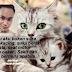 Lelaki Ini Kongsi Cerita Tentang Kebaikan Kucingnya Yang Telah Mati