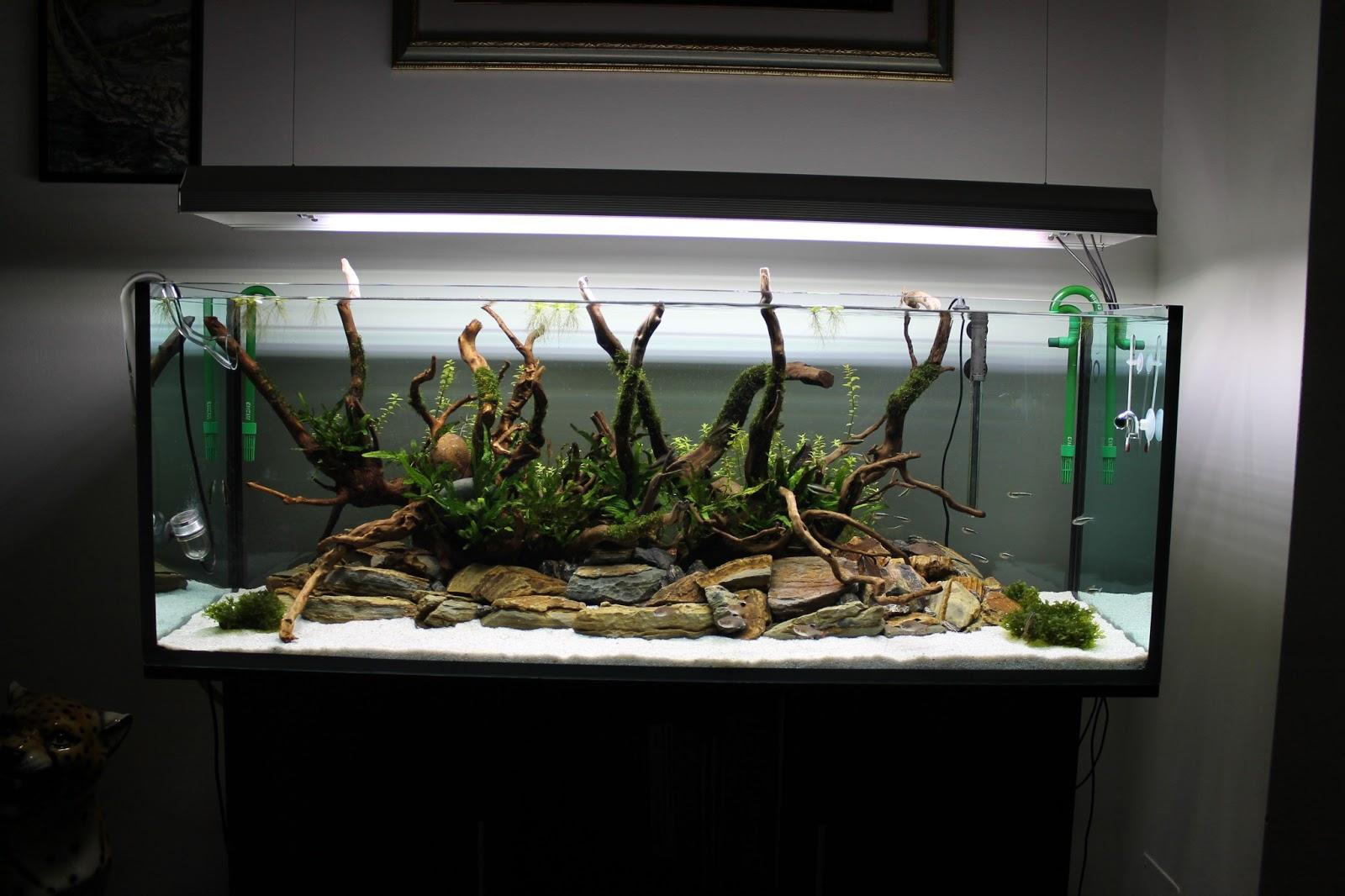 Водопровод: причина налета на стенках аквариума