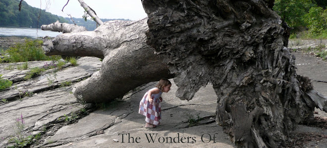 The Wonders Of