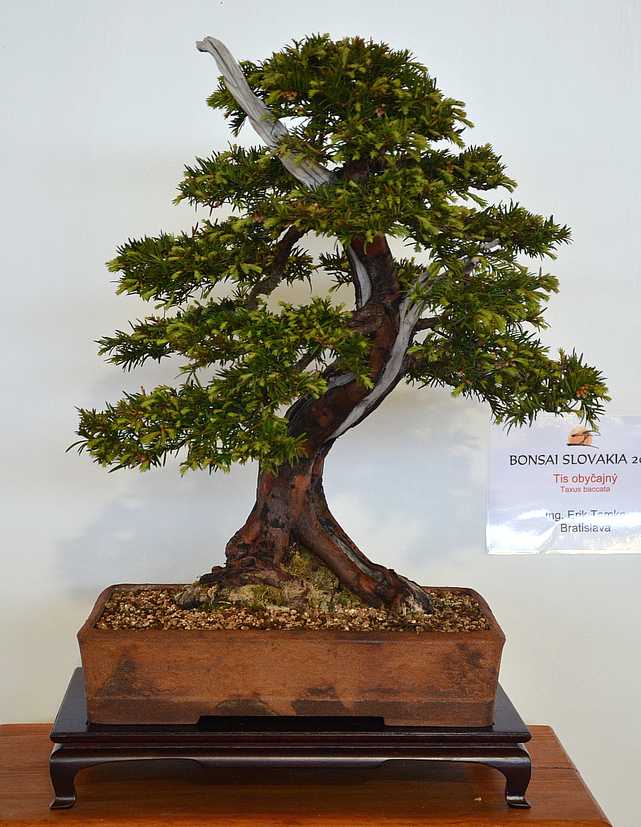 Bonsai Living Art April 2012