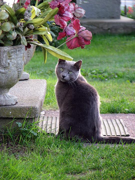 Cat from Block Island