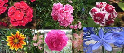 Vivero casona la colina nuestras plantas ornamentales for Importancia de las plantas ornamentales