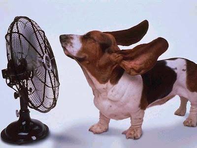 Como se vê, o cão está ligadão no ventilador