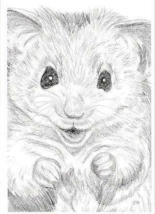 Cheeky Hamster pic