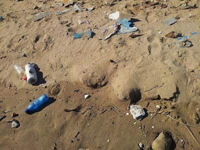 Interacción de los organismos marinos del Mediterráneo con basuras marinas, especialmente con plásticos