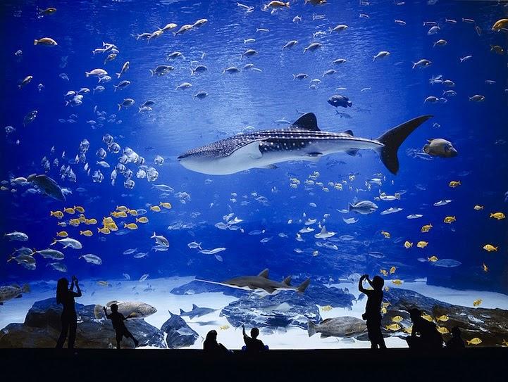 The World's Largest Aquarium