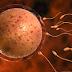 SOAL JAWAB BERSAMA PAKAR NUTRISI: Telur Isteri (Ovum) Banyak Tetapi Tidak Matang. Apa Penyelesaiannya?