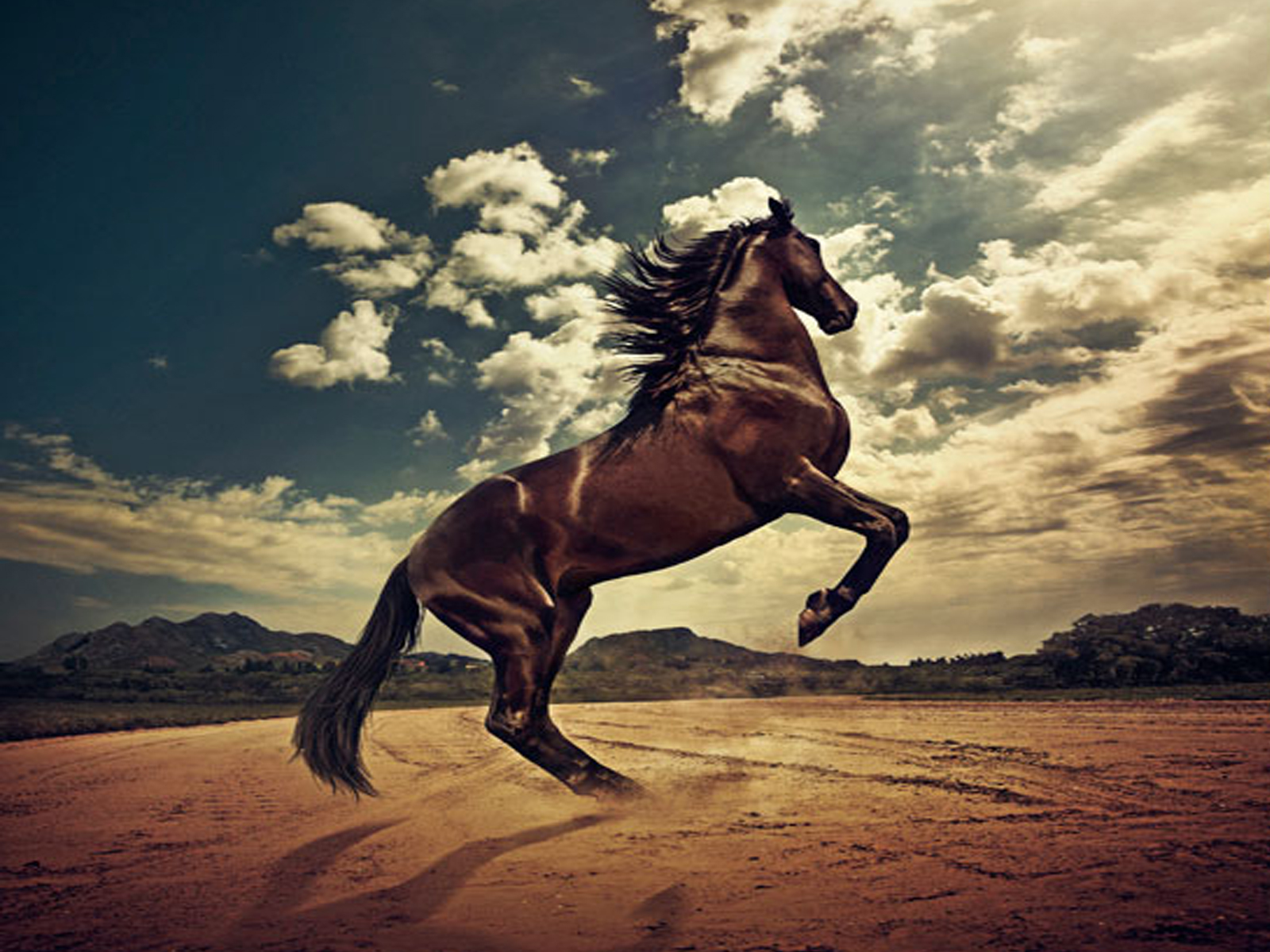 http://2.bp.blogspot.com/-xurpT5q8x98/TsqBxiViFVI/AAAAAAAAAhM/QT-E8U6_tx8/s1600/The-best-top-desktop-horse-wallpapers-25.jpg