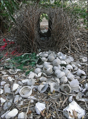 [Another nest, decorated with shells]