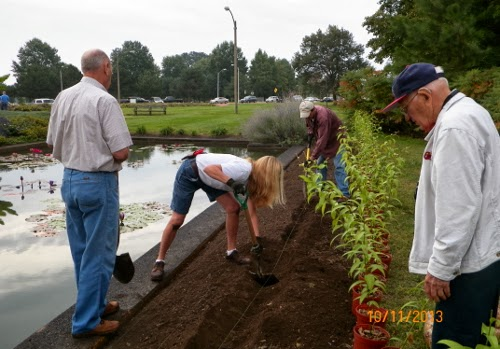 Members of Parks Department are preparing to plant the new Lilium bulbs