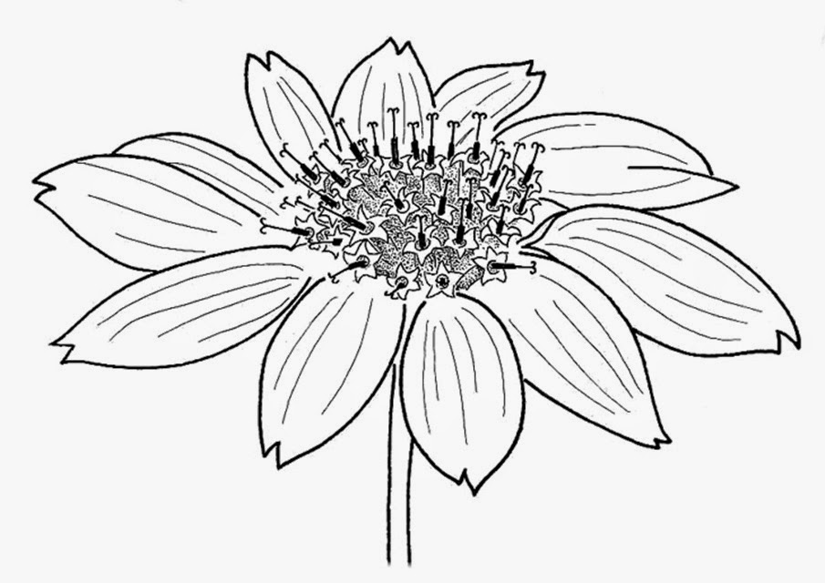Flower In Line Drawing : Flowers drawings pictures many